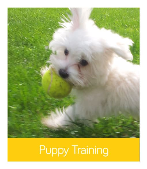 Puppy Training Services