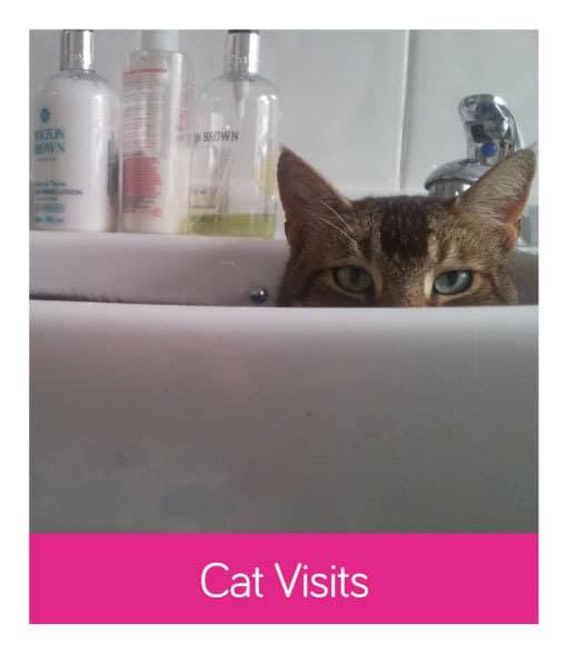 Cat Visit Services
