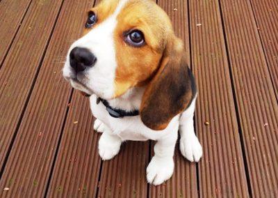 dog_sitter_wandsworth_pawpairs